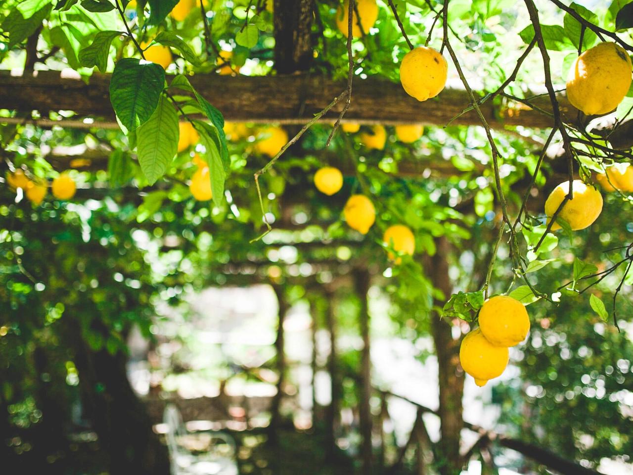 Il Sentiero dei limoni - Travel Amalfi Coast by Travelmar